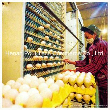 Máquina automática de recogida de huevos