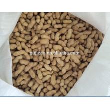 2017 neue Ernte hochwertige Erdnuss