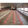 Aves de corral con equipo automático de cultivo de pollo