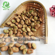 Qinghai Fava Beans Broad Beans