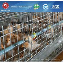 Galvanized Pullet Chicken Cage