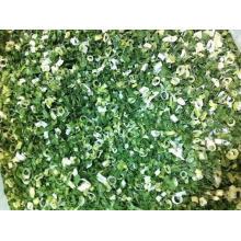 Scallion verde secado ao ar; Scallion verde desidratado