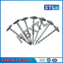 China Manufacturers for Framing Nails Galvanized Umbrella Roofing Nail With Large Head export to Aruba Supplier
