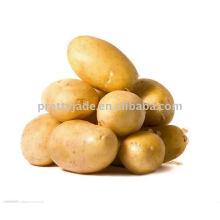 Fournisseur de pommes de terre
