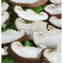 Dehydrated Mushroom Slices 2016 Crop