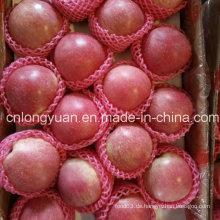 Neue Ernte Gute Qualität von frischen Qinguan Apfel
