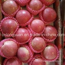 Nouvelle récolte Bonne qualité de la pomme fraîche de Qinguan
