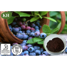Bilberry Extract; Anthocyanins 15~35% by HPLC; Anthocyanosides 25% by HPLC