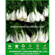 NCC06 Meiji ybrid sementes de repolho branco