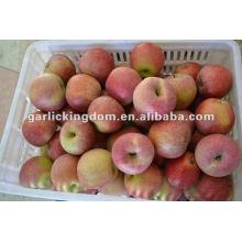 Sin desmenuzar la manzana Qinguan fresca