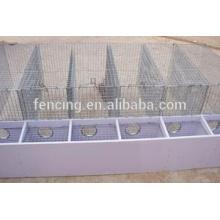 fazenda animal rede de arame hexagonal / gaiola hexagonal