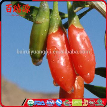 Organic food goji berry import goji berries ningxia goji appetizing