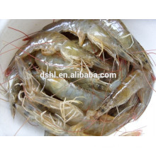 HL002 sea frozen white shrimp for sale