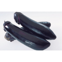 China for Fresh Organic Eggplant Organic Fresh And Crisp Eggplant export to Senegal Supplier