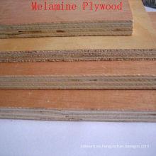 Chapa de madera Okoume de precios baratos