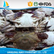 Haute qualité Frozen Fresh Blue natation Crabe Viande Avec Top Matériel