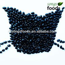 Schwarzer Bohnen-Preis, kleiner Bohnen-Erntemaschine