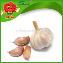 New Crop Fresh Chinese Garlic White Garlic