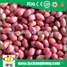 Dongbei Herkunft beste Qualität rote Haut Erdnuss zum Verkauf