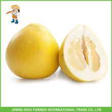 Hot Sale Chinese Pinghe Fresh Honey Pomelo Jining Rich Farmer International Trade Co., Ltd