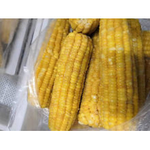 Frozen Sweet Corn on The COB High Quality