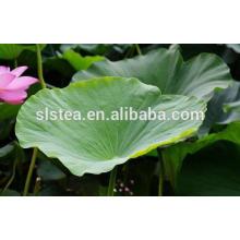 Chá da flor Chá da folha de lótus a baixo preço