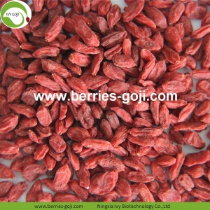 Factory Supply Fruit Nutrition Sexual Strength Goji Berries