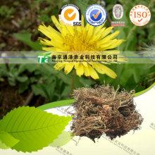 Pure Natural Herb Medicine Taraxacum Officnala PU Gong Ying Dandelion