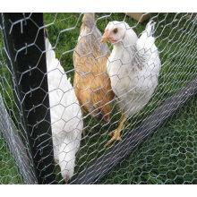 Rede de arame de galinha galvanizada com boa qualidade (TS-J601)