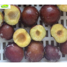 Provide Frozen Plum Export Standard Delicious Yokid Frozen Plum