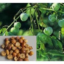 Szechwan Chinaberry Fruit Extract/Toosendan Fruit Extract/Fructus Toosendan Extract