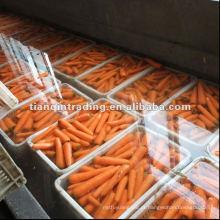 cenoura amarela para venda