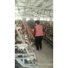 Alibaba Batterieschicht / Broiler Hühnerkäfig