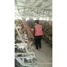 Alibaba Battery Layer / Broiler Chicken Cage
