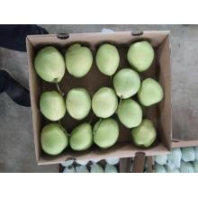 Shandong pear for Middle east