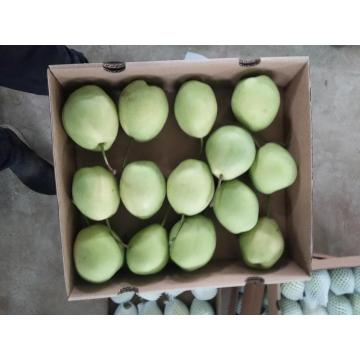 Шаньдунская груша для Ближнего Востока