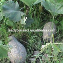 MPU14 Багуа желтого цвета гибрид сладкой тыквы семена для посадки