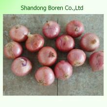 Weiß / Rot / Gelb Zwiebel mit angemessenem Preis in China