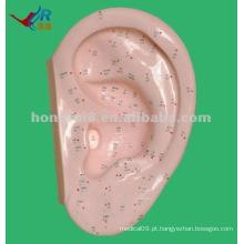 Vivid 40cm Ear Model para Acupuntura, ponto de ouvido de acupuntura