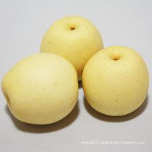 New Crop Top Quality Ya Pear