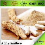 100% pure nature achyranthes bidentata extract powder