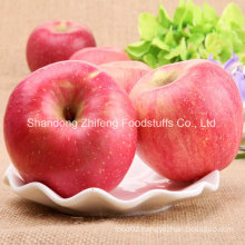 2015 New Fruit Fresh FUJI Apple