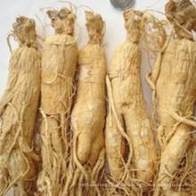 Женьшень panax корень