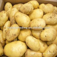 Produção de batata