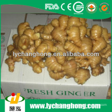 varieties of ginger/ginger and garlic export/fresh ginger sale