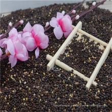 origen de china de mijo negro broomcorn