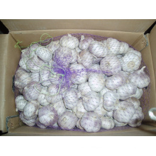 Carton Packing Fresh Normal White Garlic (4.5cm and up)