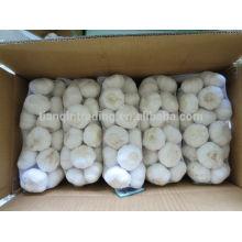Cold Room Garlic Supplier 1kg/bag, 10kg/carton