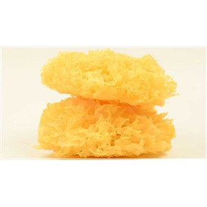 High Quality Dried white fungus tremella