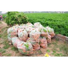 vietnam new fresh carrot exporter